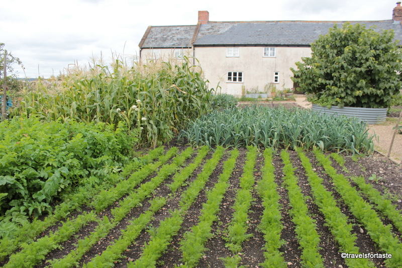 Kitchen garden at River Cottage