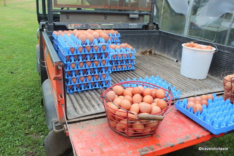 Freshly picked Happy Eggs