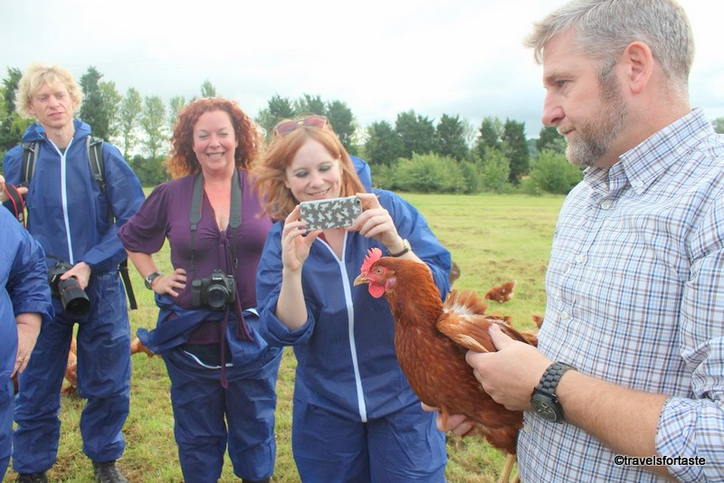 Happy Hens posing for our cameras - Happy Egg farm at Bulborne