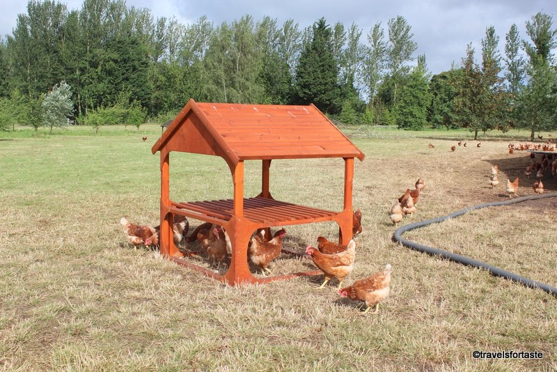 Specially designed activity kit at Bulforne farm for Hen welfare