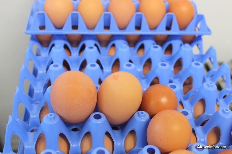 Happy Eggs of various sizes