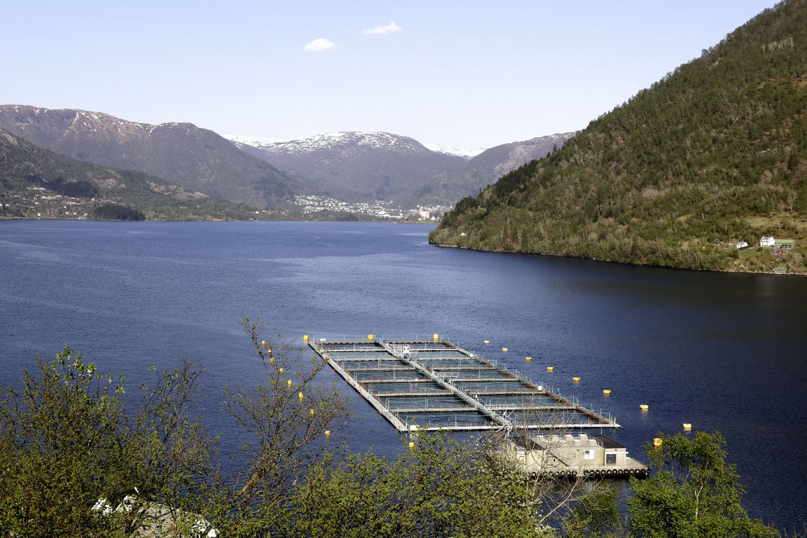 Norwegian fjord trout farming